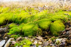 Moss on the ground Stock Photos