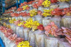 Colorful mushroom Stock Photos