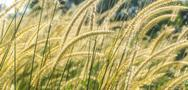 Stock Photo of wild grass