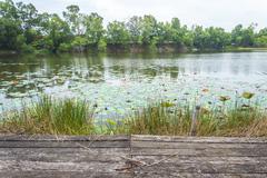 Old wooden platform facing to lake Stock Photos