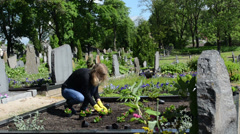 Woman plant begonia flowers on close friend grave in cemetery Stock Footage