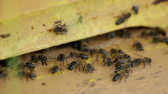 Bees in the hive, efficient work, concept Stock Footage