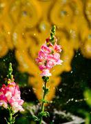 flower and sprinkler - stock photo