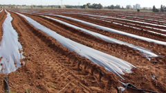 Stock Video Footage of Plastic mulch corp production