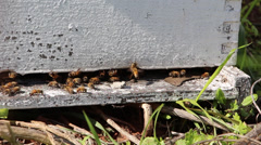 Honey bee hive Stock Footage