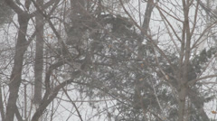 Birds on tree branches in snowstorm, snowfall, bad weather in winter, snowflakes Stock Footage