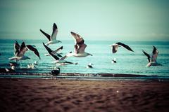 Meri lintu lokki. Kuvituskuvat