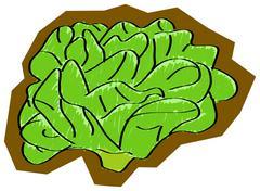 Stock Illustration of lettuce