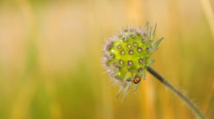 Natural meadow close-up Stock Footage