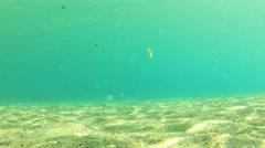 Underwater scenery - stock footage