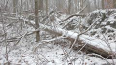 Snow on a fallen tree Stock Footage