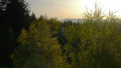 AERIAL: Nuori metsä auringonlaskun Arkistovideo