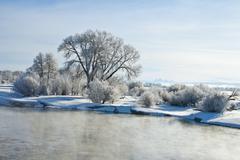 frozen morning - stock photo
