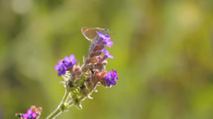Butterfly sitting on a flower in the natural meadow in summer Stock Footage