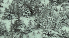 Adult Bull Moose in Snow Stock Footage