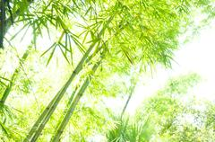 Hi key bamboo Stock Photos