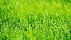 Green grass after the rain with diamonds of water drops Stock Footage