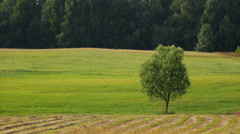 Rural landscape, green field with a lonely tree Stock Footage