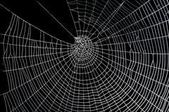 Scary frightening spider web for halloween Stock Photos