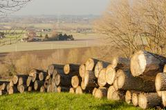 felled tree trunks in a forest in autumn flanders - stock photo