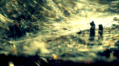 Indian summer spider's web Stock Footage