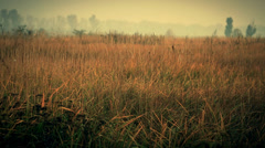 Early foggy morning field Stock Footage