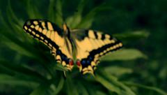 The Yellow- black butterfly fly away Stock Footage
