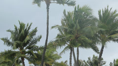 Palm trees moving and shaking by stormy wind Stock Footage