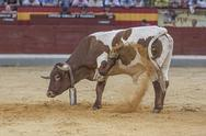 Stock Photo of halter with cowbell digging into the sand of the plaza de toros de jaen