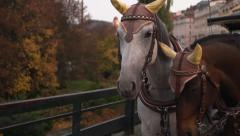 Horse And Coach. Horse-drawn brougham. Evening. European city. Stock Footage