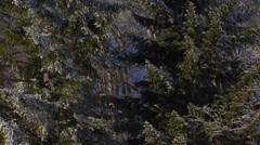 Winter trees in white frost on hillside - tilt up blue sky Stock Footage