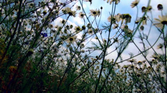 View of the flowers from the bottom point Stock Footage