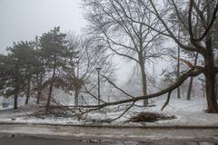 Ice storm: damaged trees Stock Photos
