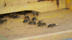 Bees in the hive, flying, working Stock Footage