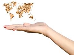 Girl Hand Holding World Map Wheat Grains - stock illustration