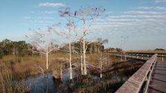 Dwarf Cypress at Everglades, National Park, Florida Stock Footage