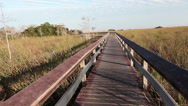 Stock Video Footage of Boadwalk in the Everglades