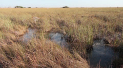 Sawgrass in the Everglades Stock Footage