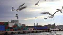 Ship-following birds Stock Footage