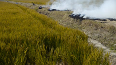 Farmers burning straw in the fields,china, Stock Footage