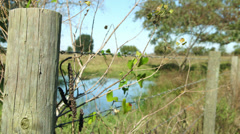 barbed wire fence in a pasture - stock footage
