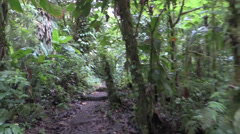 P03275 Walking on a Trail Through a Rainforest Jungle - stock footage