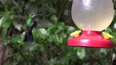 P03270 Costa Rica Hummingbird at Feeder Stock Footage