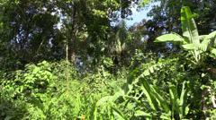 P03294 Jungle Vegetation and Habitat in Costa Rica Stock Footage