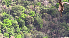 P03292 Costa Rica Rainforest Jungle Canopy and Trees - stock footage