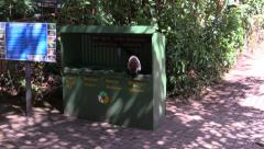 P03253 Coati or Coatimundi in Garbage Dumpster Stock Footage