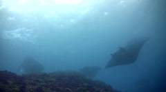 Bunch of giant manta ray (Manta birostris) swimming over reef Stock Footage