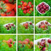 collage of cherries and strawberry on green grass - stock photo