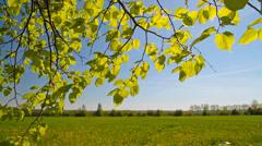 Spring leaves, landscape Stock Footage