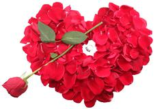 Red rose petals in heart shape with rose arrow and diamond ring in the middle Stock Photos